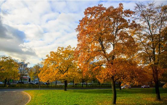 St. Petersburg: A Golden Autumn for Visitors